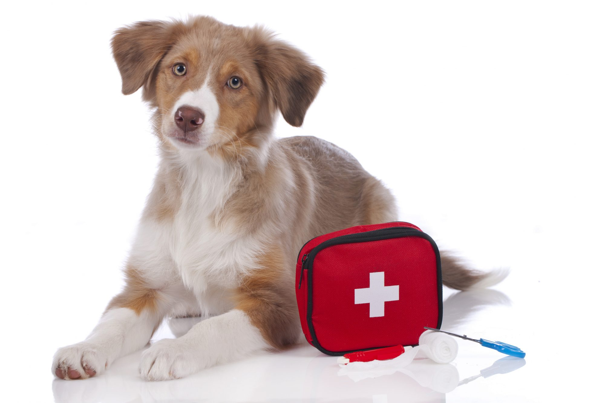 How to Be Prepared for a Pet Emergency with Pet First Aid