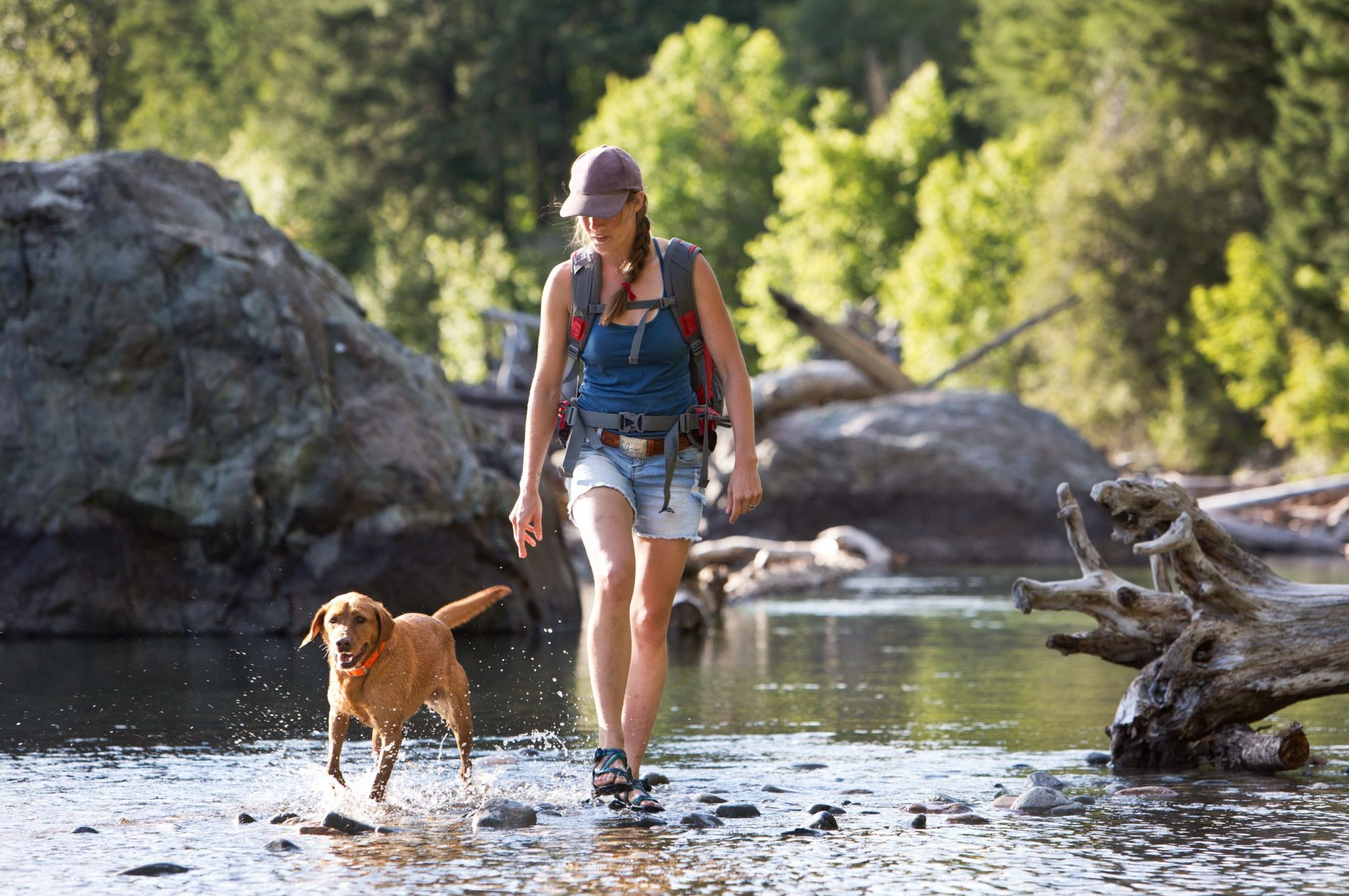 Dog and hiker in stream.