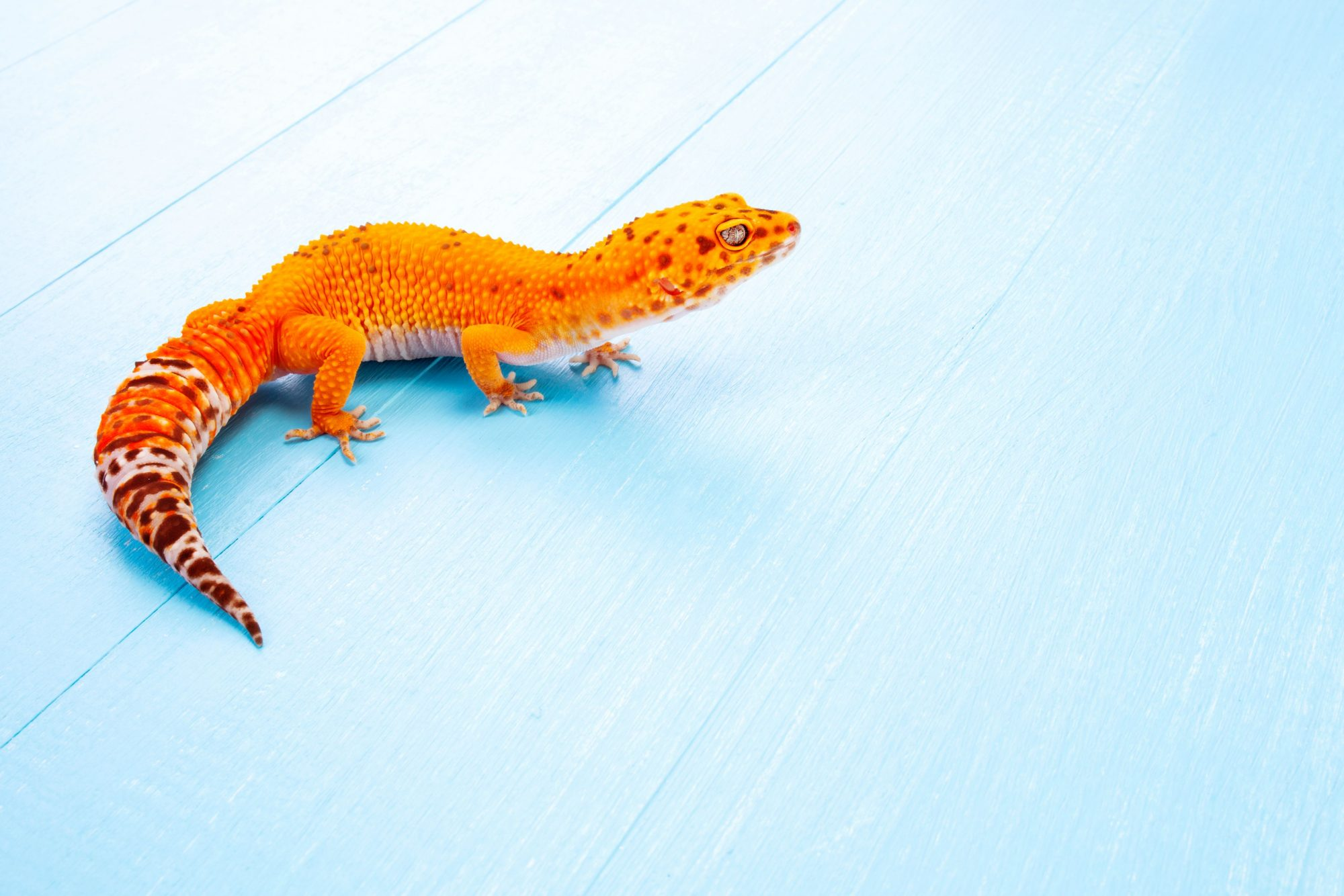 The Keys to Exotic Pet Care