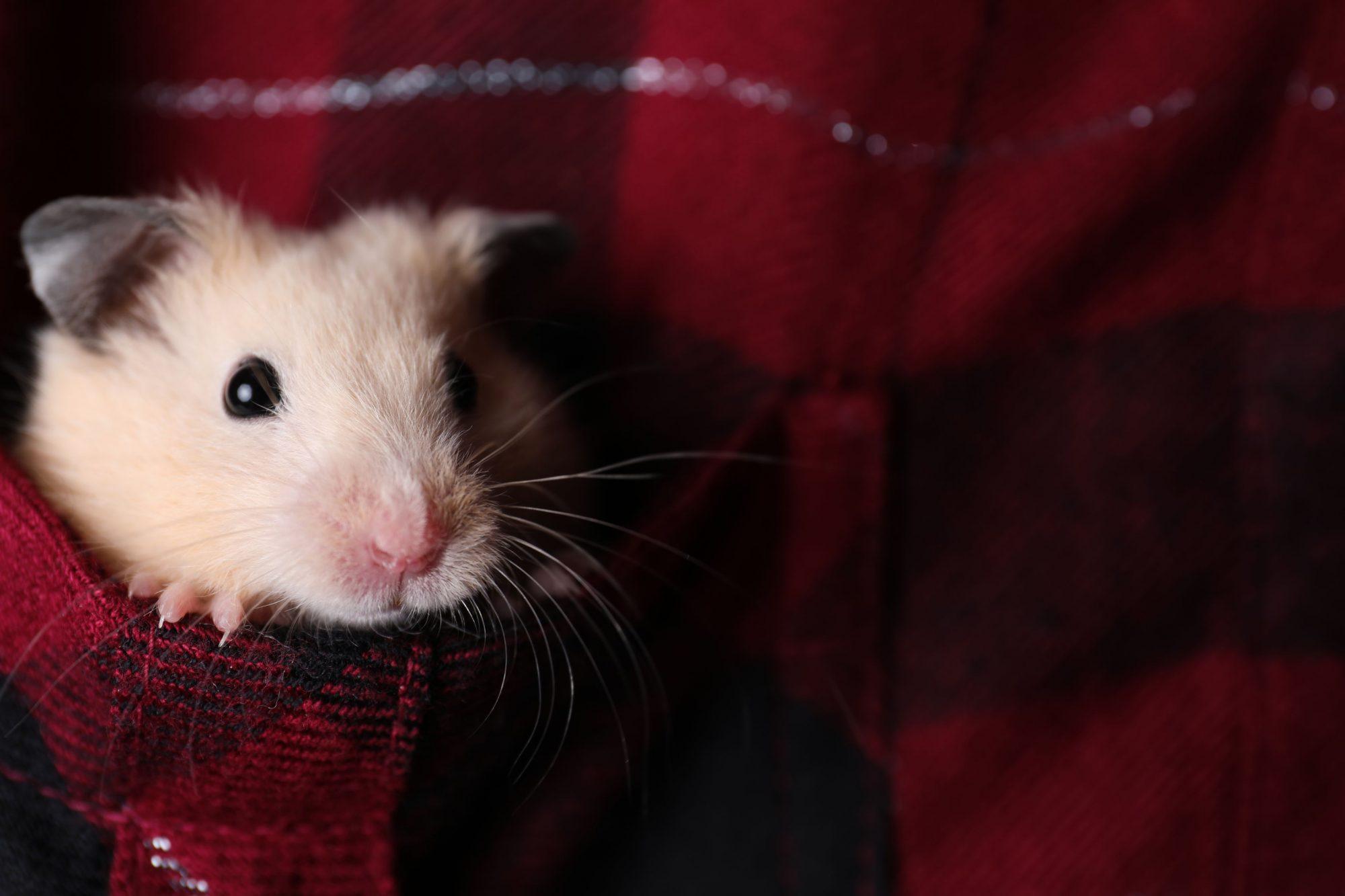 Pocket pet wellness.